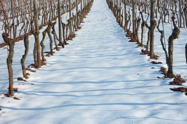 vineyard-636229_640
