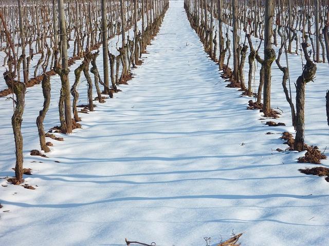 La nieve y el vino