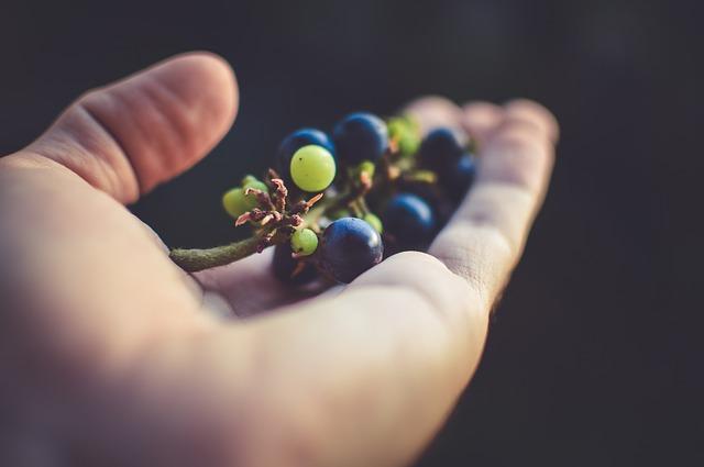 Los aromas de las variedades de uva