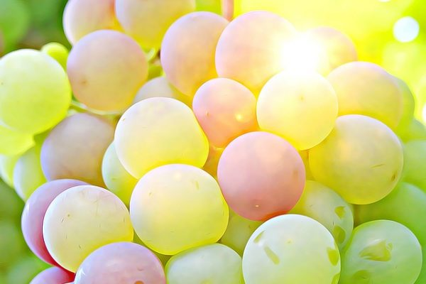 grape-2002848_640